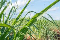 Flüssiggas für die Landwirtschaft